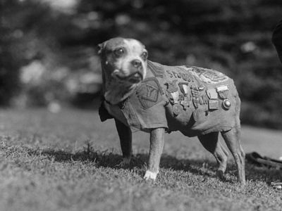 Display sergeant stubby